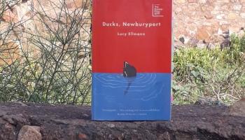 Ducks, Newburyport Writerly Life
